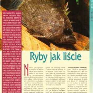 kamuflaż u ryb liścień brodaczyk obrębka