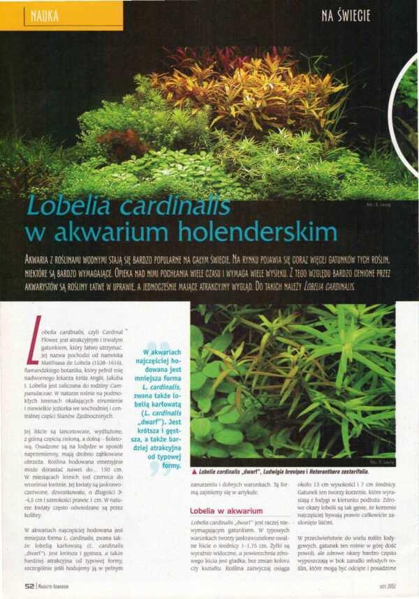 Lobelia cardinalis rośliny akwariowe