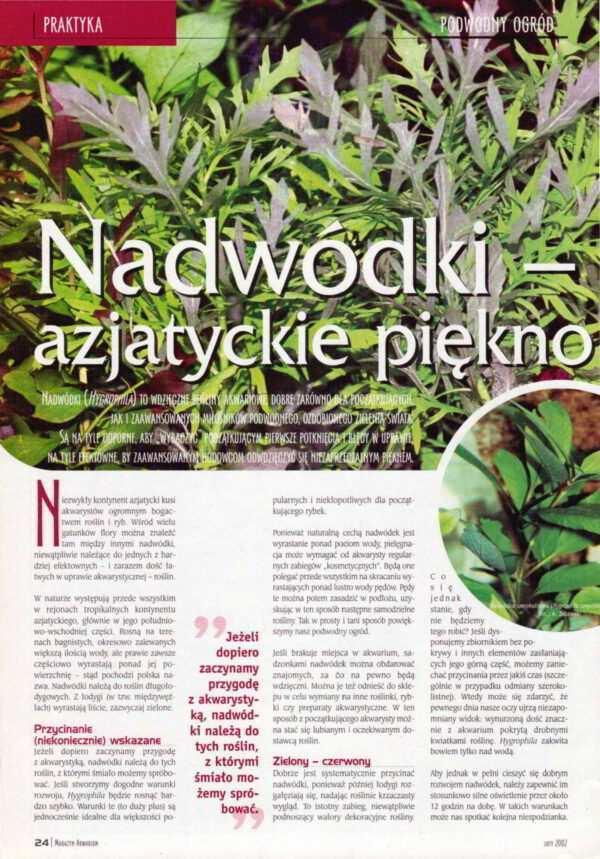 nadwódki rośliny akwariowe