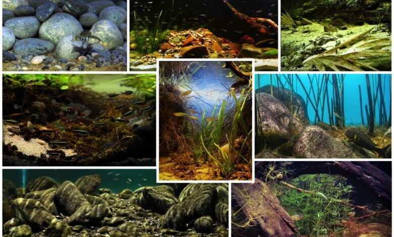Biotope Aquarium Contest 2021
