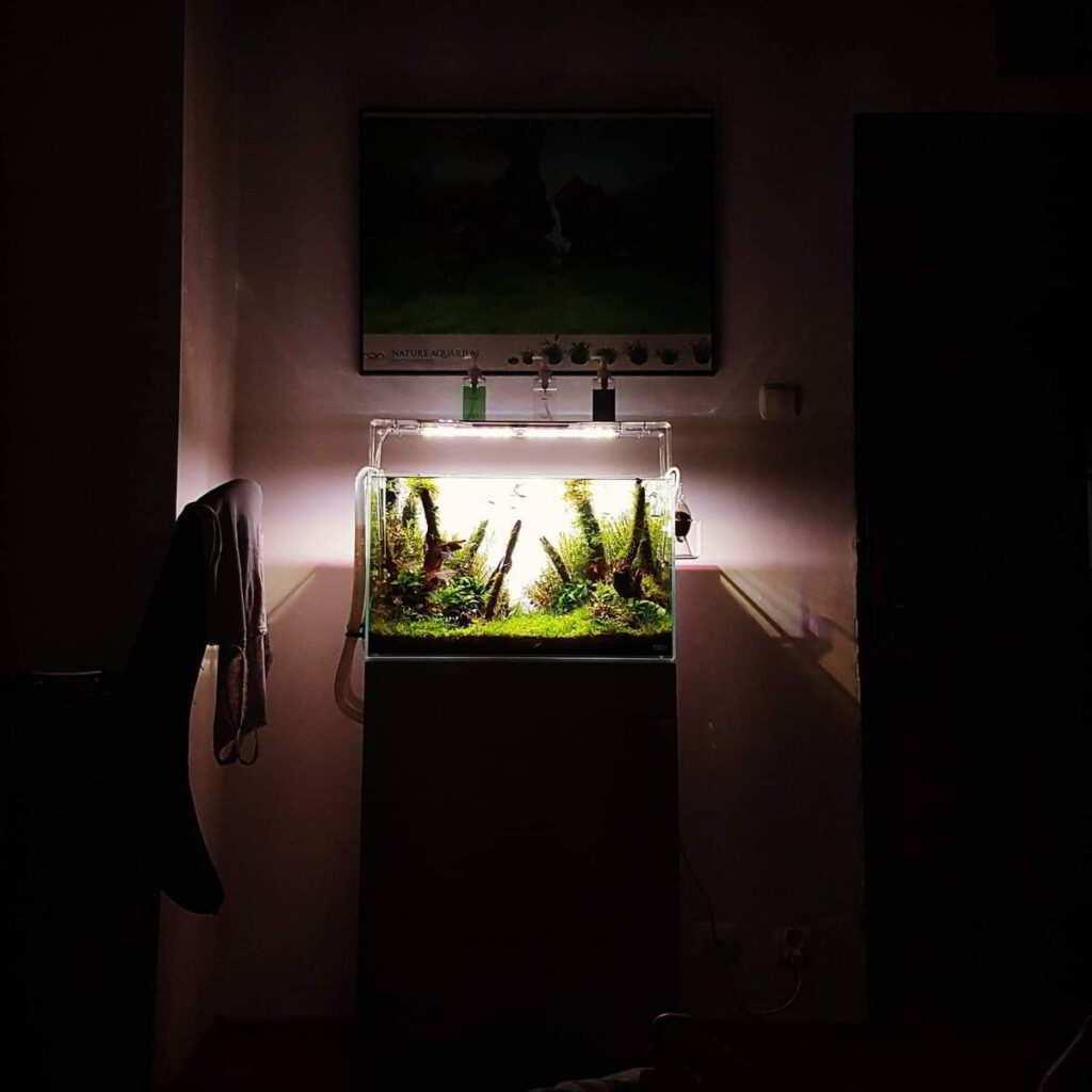 Aquascaping. Fot. Adam Golik