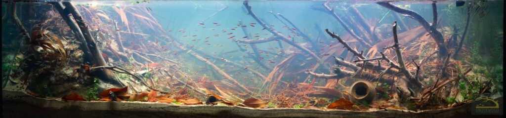 Alejandro Rios Martin Orinoko akwarium biotopowe