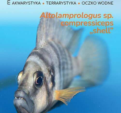 Magazyn Akwarium czasopismo 4/2021